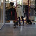 Hundeschule Sasha – Lektion 2: Fuß auf der Leine